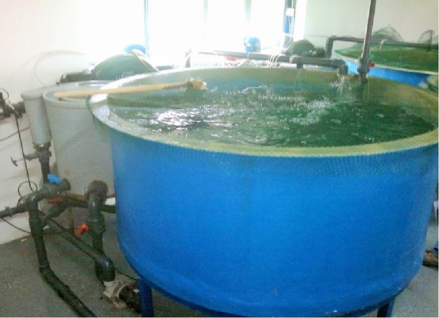 Recirkulacioni akvakulturni sistemi – koje vrste riba i kako gajiti