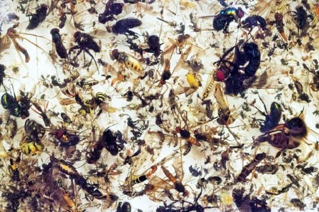 Tri četvrtine letećih insekata nestalo za četvrt veka