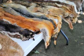 Srbija zabranila ubijanje životinja radi proizvodnje krzna