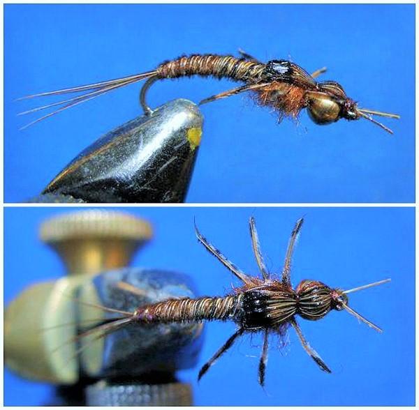 SBS Nimfa fazanov rep