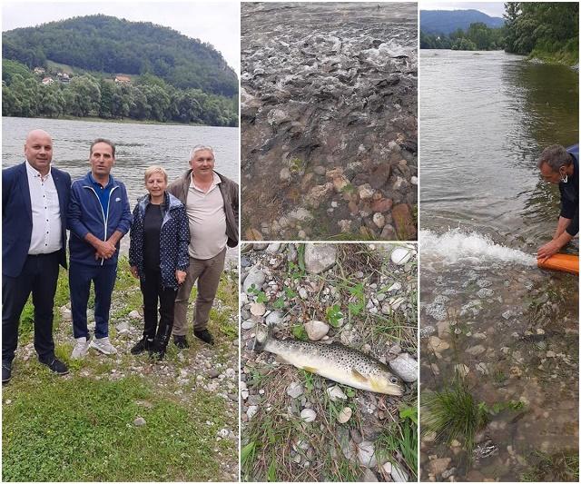 Poribljavanje potočnom pastrmkom rijeke Drine i rijeke Jadar