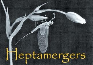 Heptamerdžeri