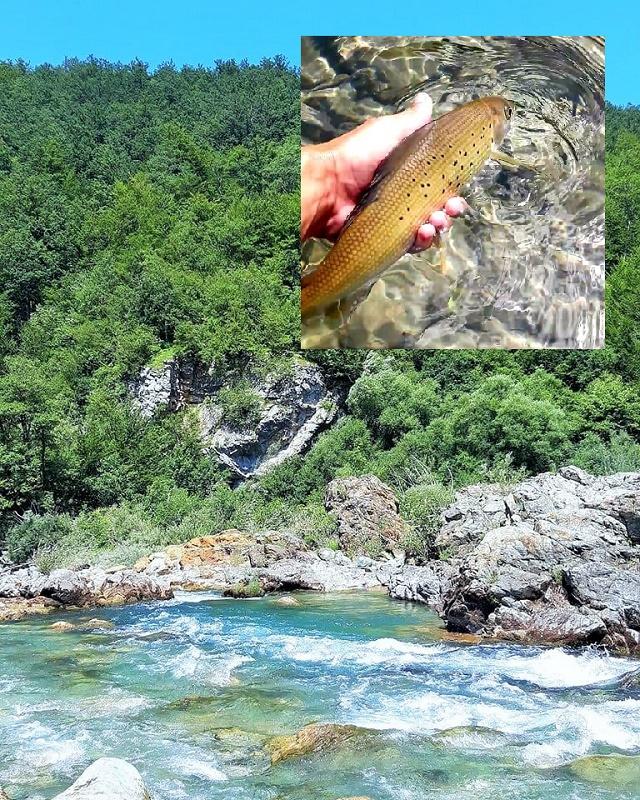 Današnji ribolov na rijeci Tari