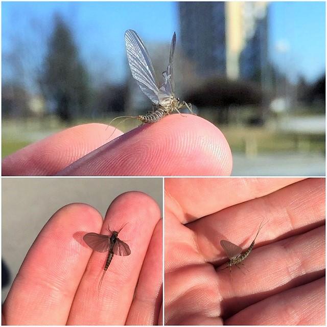 Prvi insekti u februaru pored vode