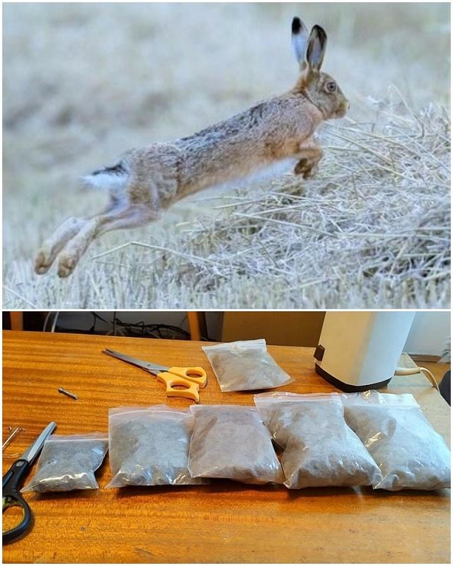 Pravljenje dabinga od krzna zeca