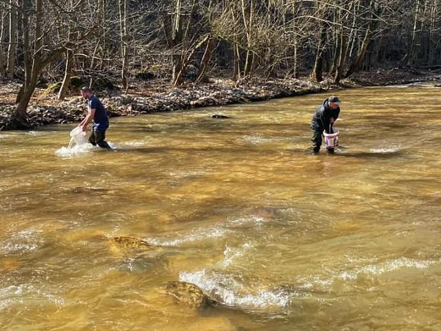 Poribljavanje rijeke Miljacke