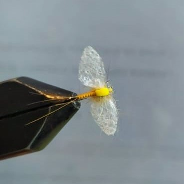 SBS: Spiner sa krilima od folije