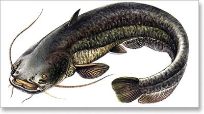 Zabrana zbog mresta nekih riba u maju