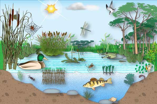 Biološka svojstva vode i životni uslovi