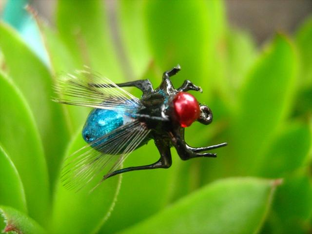 Plava zunzara