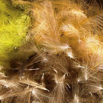 CDC Perje – farbanje