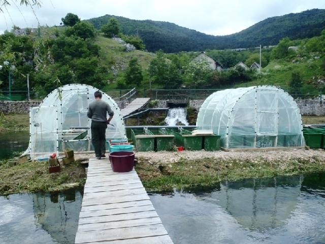 Hrvatski centar za autohtone vrste riba i rakova