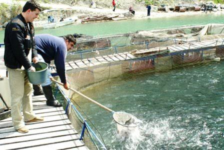 Promocija akvakulture u zemljama bivše Jugoslavije