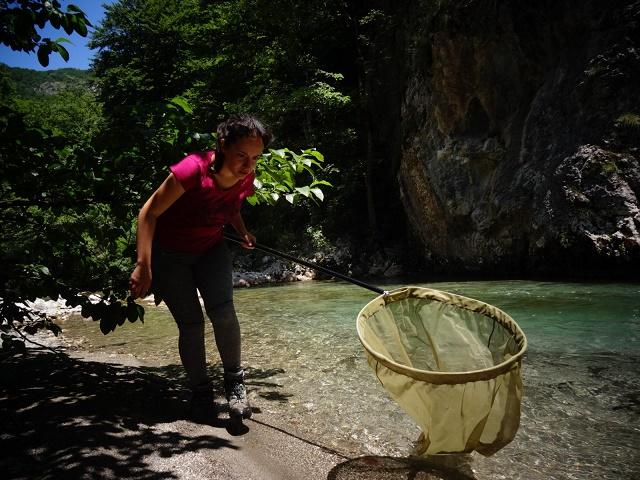 Nacionalni park Sutjeska – mrtvi kapital ili laboratorija u prirodi