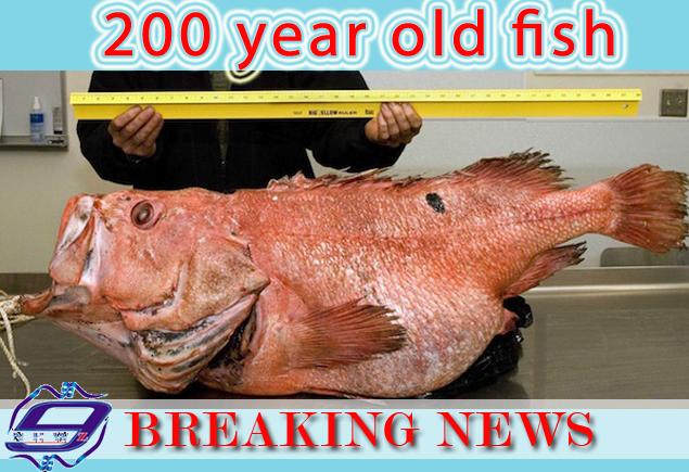 Na Aljasci upecana riba stara 200 godina