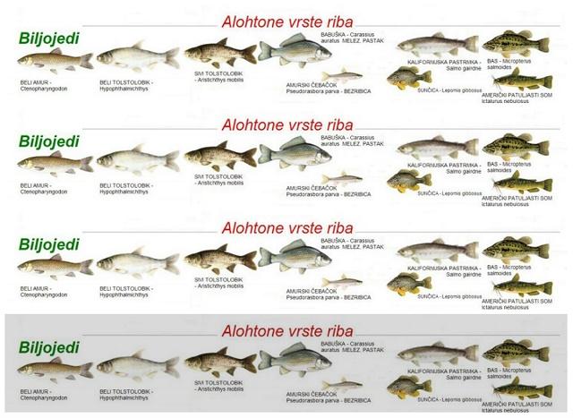 Alohtone vrste riba