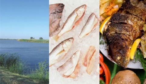 Zašto je riba zdrava?