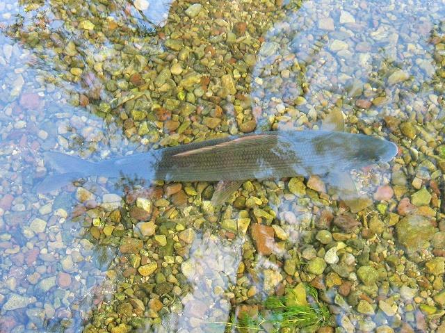 Lovostaj zbog mresta riba u martu