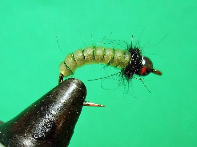 SBS: Bio Thread larve