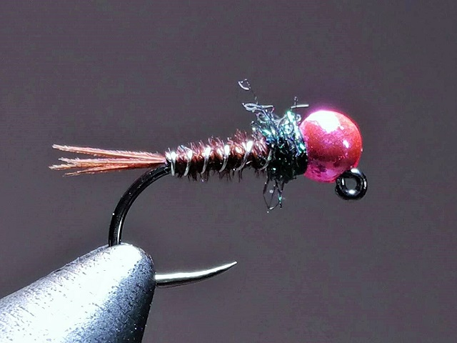 Nimfa fazanka s pink glavom