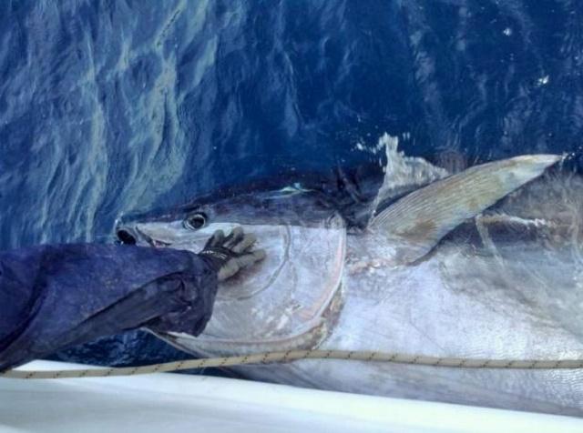 Ulovio tunu kapitalca vrednu skoro 5.000 evra