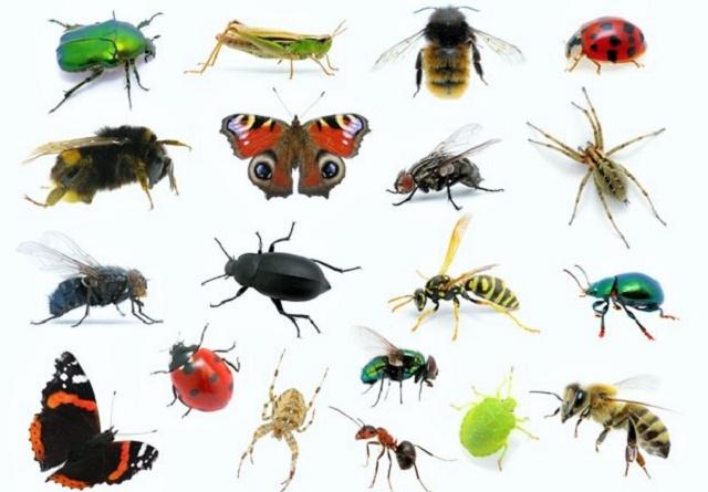 Trećina insekata bi uskoro mogla potpuno da nestane