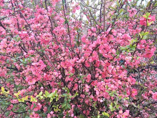 Danas nam stiže proleće!