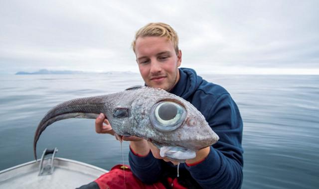 Norvežanin je ulovio neobičnu ribu vrste Himera