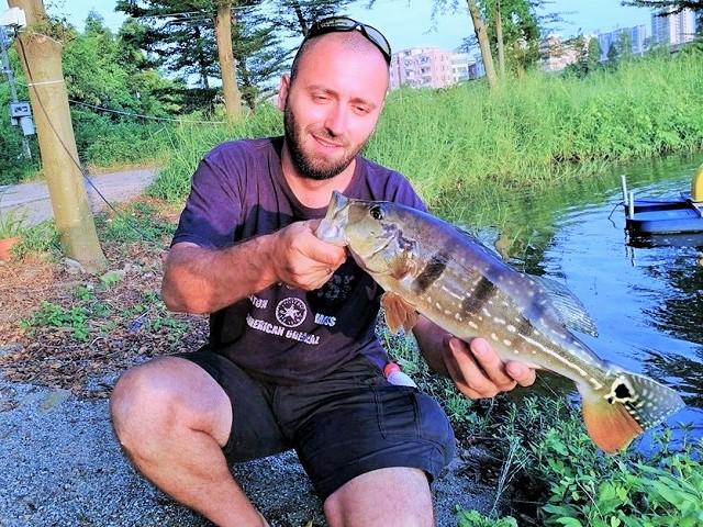 Peacock bass – mušičarenje