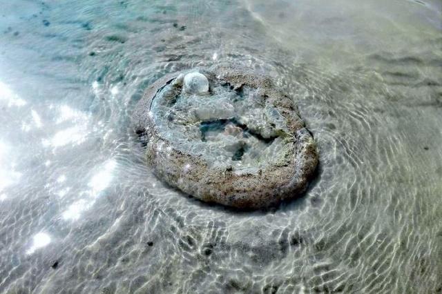 Neobično stvorenje u plićaku Dunava