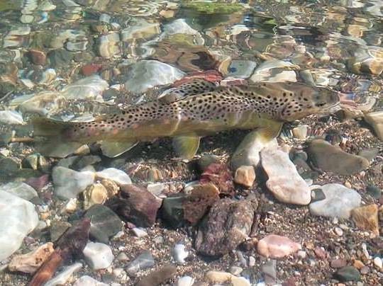 Januar ribe u lovostaju
