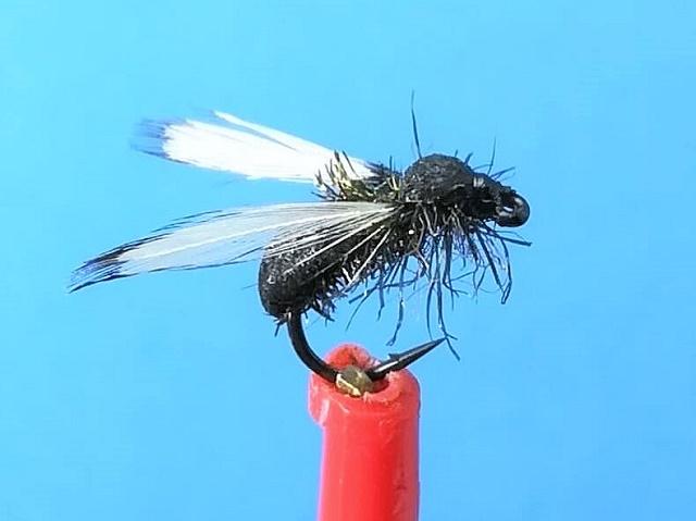 Policelonski mrav sa krilima