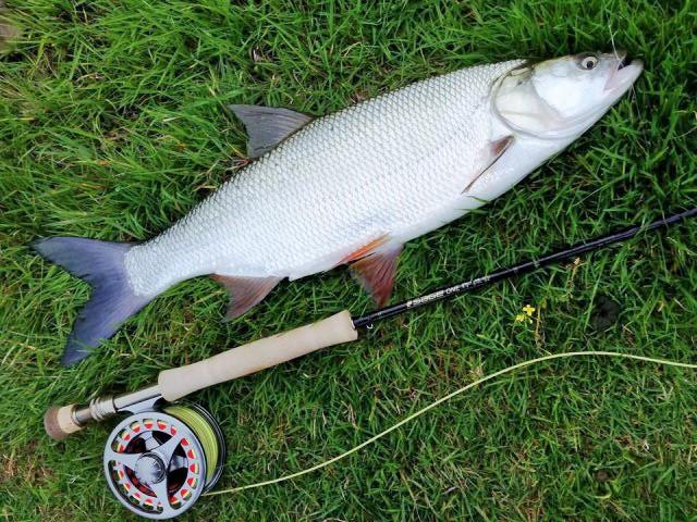 Zbog mresta lovostaj riba od 15.04.