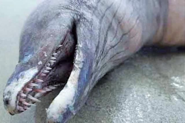 Na plaži u Meksiku pronađeno čudno stvorenje