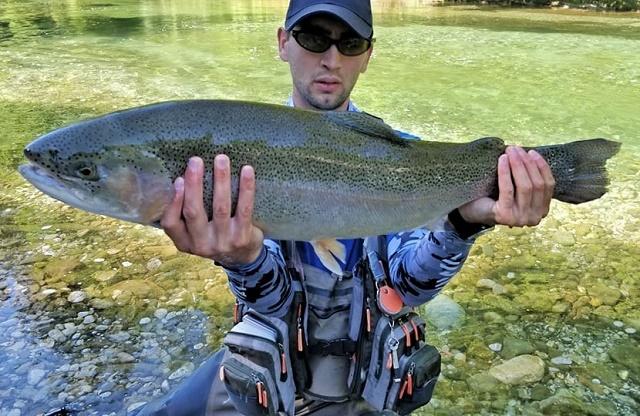 Kalifornijska pastrva 81.5cm rijeka Savinja – Branimir Šola