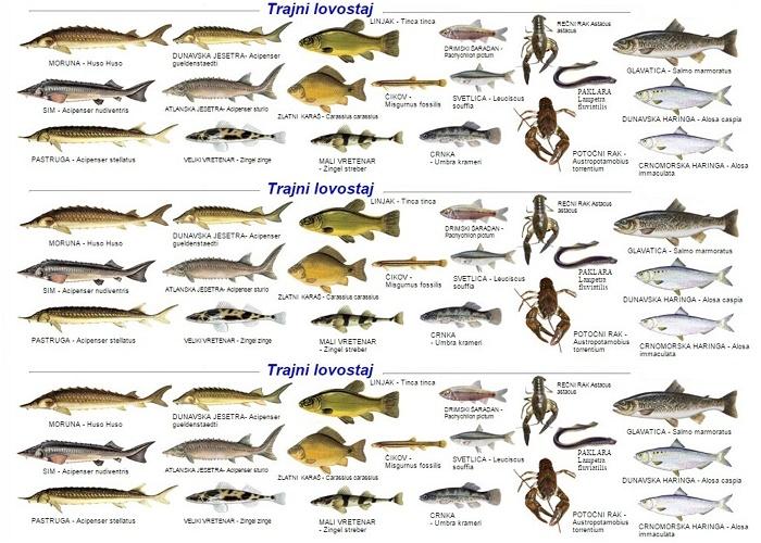 Lovostaj zbog mresta riba u septembru