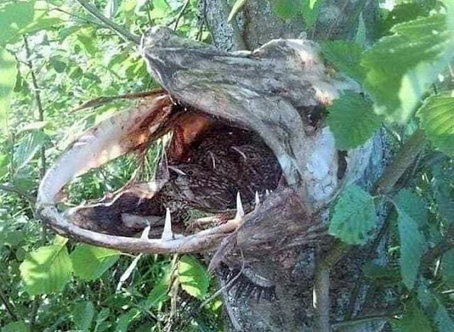 Ptičije gnezdo u ustima štuke